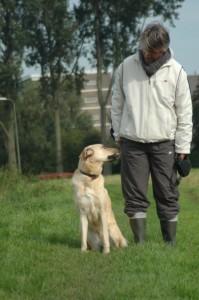 hondenbrein3