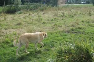 hondenbrein4