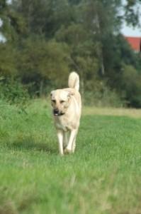 hondenbrein5